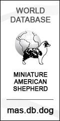World database Miniature American Shepherd